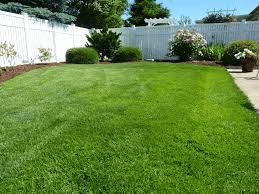 Why You Should Hire A Lawn Aerator