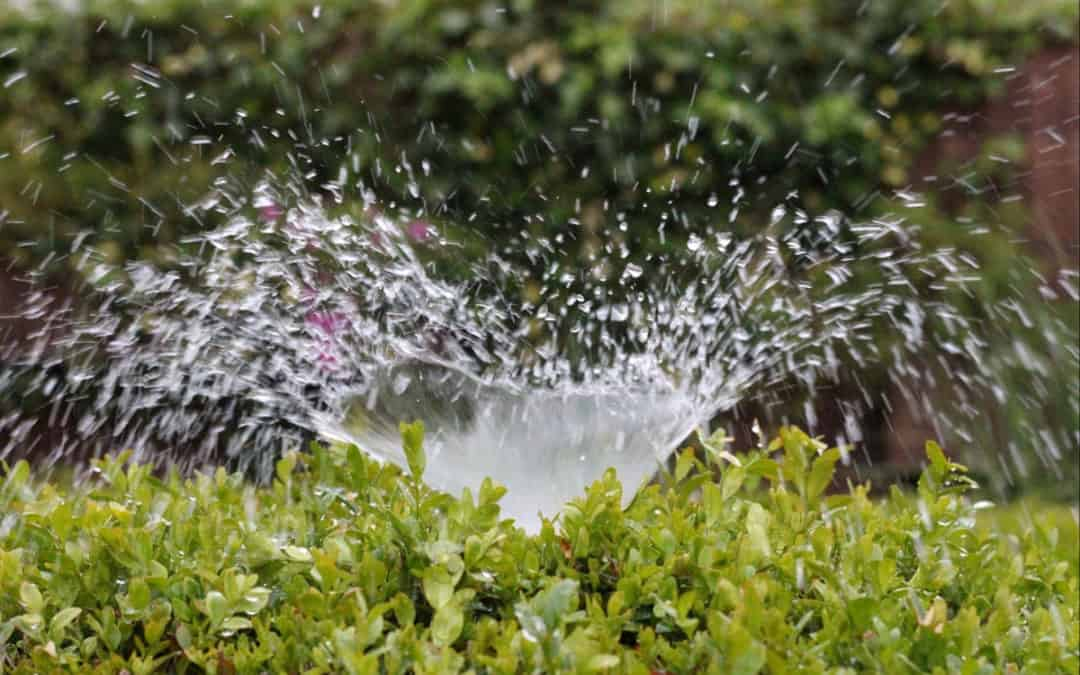 Sprinkler Systems – What You Need to Know